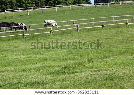 an old wooden fence for animals raised on the farm. Spring, green grass