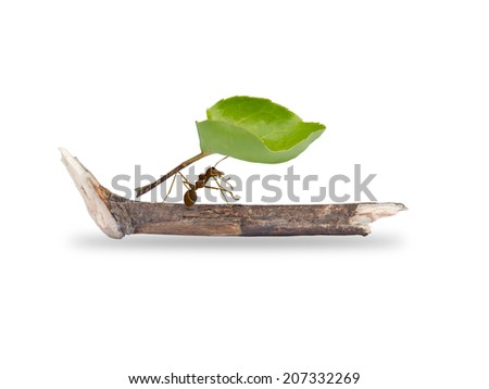 ants carrying leaf,  - stock photo