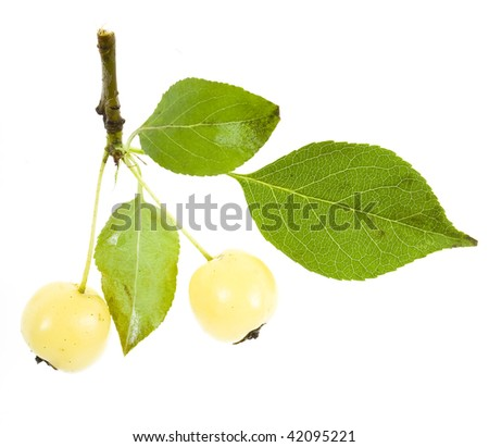 apples rennet branch close up isolated on white background  - stock photo