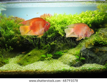 Aquarium - stock photo