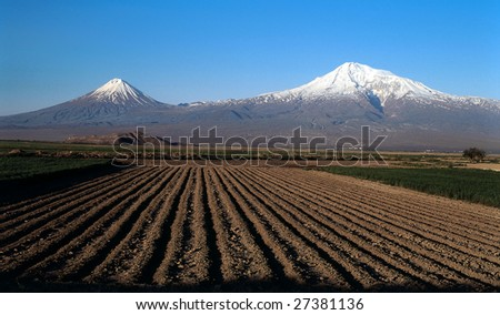Ararat valley on blue sky with grape bed - stock photo