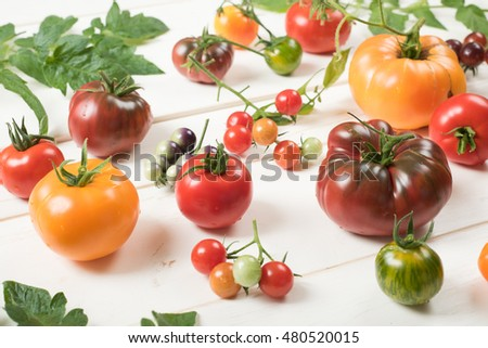 Artistic Arrangement of a Variety of Colorful Tomatoes fresh picked from the garden on a Rustic White Board Background, side angle top view.  Ready for cooking, slicing, canning, or spaghetti sauce