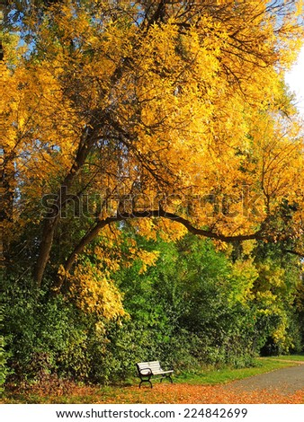 ash tree  and inviting bench in autumn in ketring park, littleton, colorado - stock photo