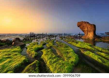 At a season of year at dawn, the stones in the Co Thach coast were fully covered with moss and seaweed. That coast is located in Tuy Phong, Binh Thuan province, Vietnam