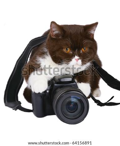 Ð¡at with a camera. - stock photo
