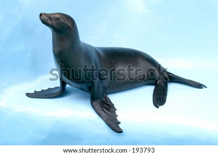 """Auto"" the Sea Lion - stock photo"