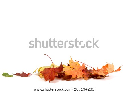 Autumn Leave - stock photo