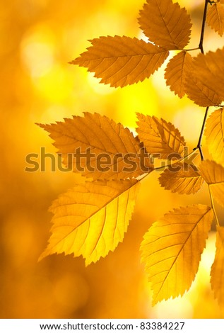 autumn leaves background on forest - stock photo