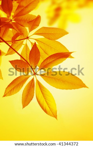 Autumn  leaves of a chestnut. - stock photo