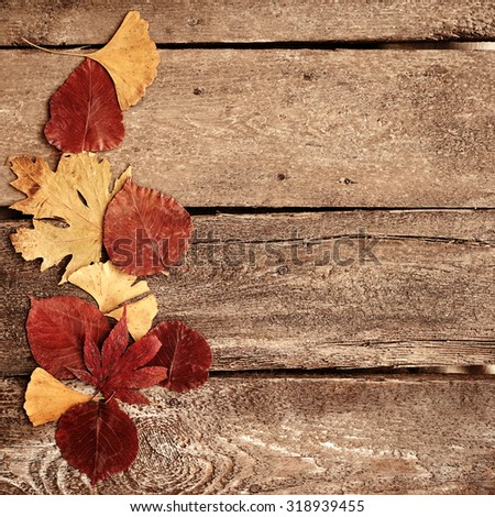 Autumn leaves on wood background,free space for text              - stock photo