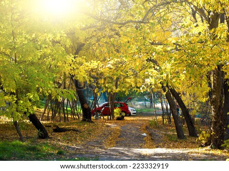 Autumn sunny day in the park - stock photo