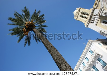 Avenue Habib Bourguiba, palm tree in front of Cathedral of St Vincent de Paul in Tunis,Tunisia. - stock photo