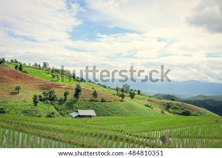 """Baan Pa Pong Piang"" located in Mae Jam, Chiangmai, Thailand this place is farmer plant rice on terrace."