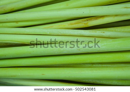 Background and Texture: Lemon Grass