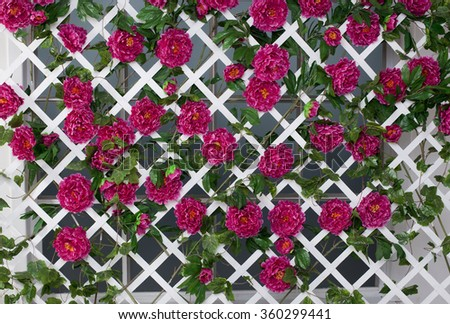 background of flowers on white fence