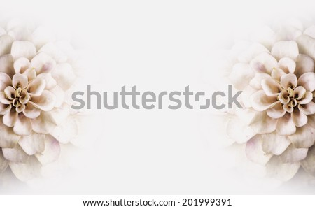 Background of pink white flowers copy-space - stock photo