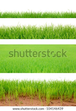 4 Backgrounds of fresh spring green grass Isolated On White - stock photo