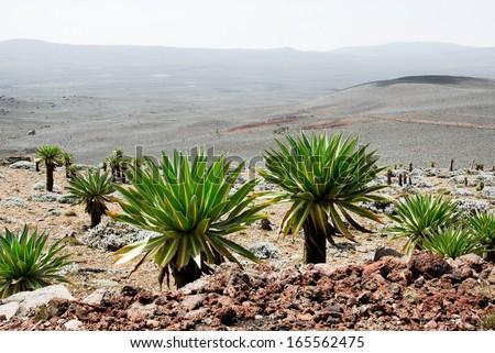 Bale mountains national park, Ethiopia - stock photo