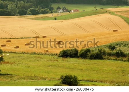 Bales  of straw on the hilly fields. - stock photo