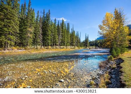 Banff National Park. Canada, Rocky Mountains. Beneaped creek autumn, surrounded by pine forest