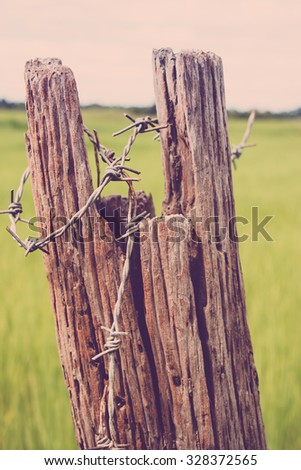 Barbed wire in a log. The log fence in the rice field where is the rural in Thailand  - stock photo