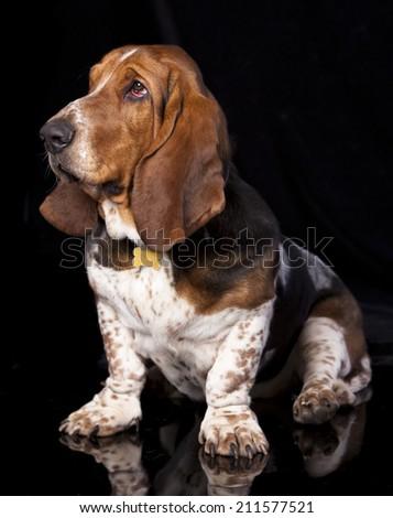 Basset hound and boy - stock photo
