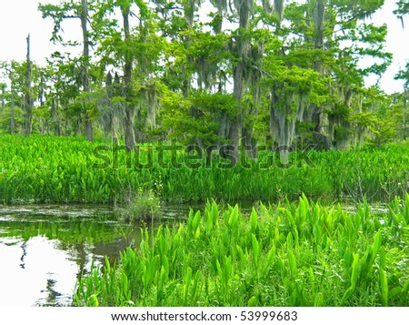 Bayou Country Unspoiled - stock photo