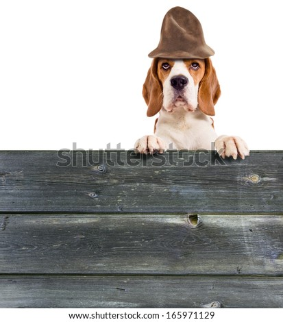 beagle in hat  isolated on white background  - stock photo