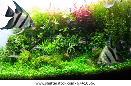 Beautiful aquarium - stock photo
