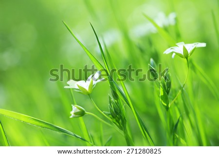 Beautiful daisy flowers-spring - stock photo