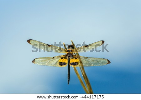 Beautiful dragonfly,Dragonfly,insect. - stock photo