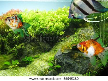 Beautiful fish aquarium - stock photo