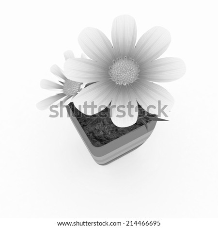 beautiful flower in the colorful pot - stock photo
