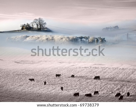 Beautiful  Frozen Prairie with trees in mists and livestock grazing as the sun sets - stock photo