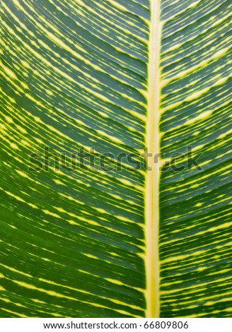Beautiful green and yellow leaf texture