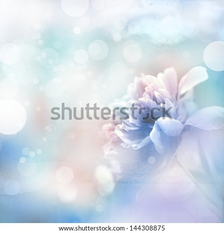 Beautiful peony flowers in sun blure and light rays with colored filters - stock photo
