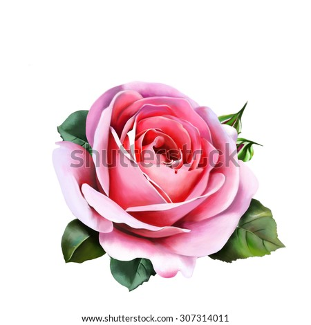 Beautiful pink rose with leaves and buds closeup isolated on white background, watercolor, illustration - stock photo
