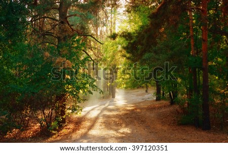 Beautiful Scene Misty Old Forest with Sun Rays, Shadows and Fog - stock photo
