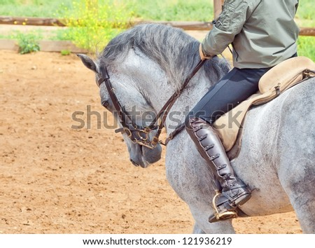 beautiful spanish grey horse with rider - stock photo
