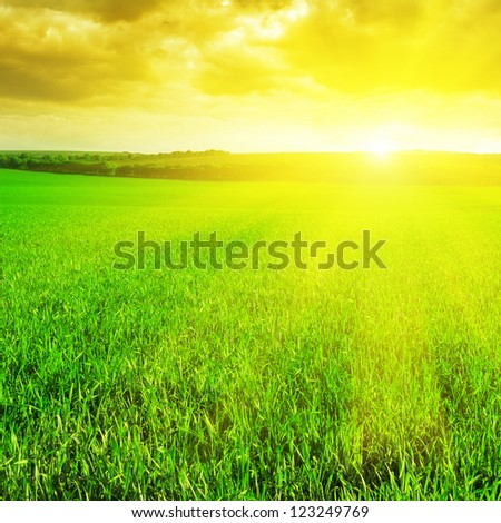 beautiful sunrise over a wheat field - stock photo