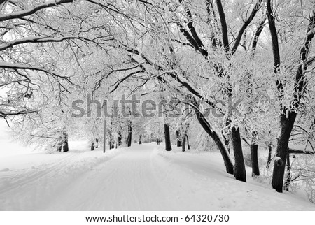 Beautiful trees covered with frost in winter park - stock photo