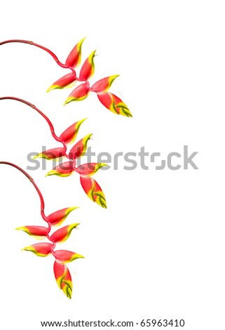 3 beautiful Tropical Flowers against a white background - stock photo