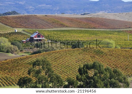 Beautiful Vineyard - stock photo