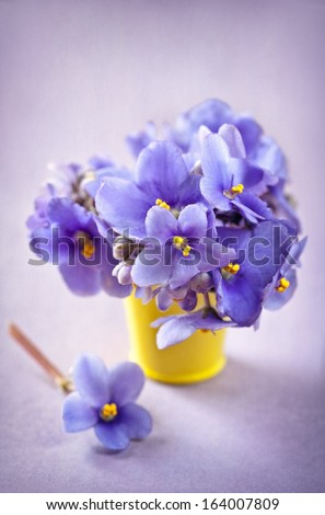 beautiful violet flowers in a yellow pot on a lilac background (Saintpaulia) - stock photo