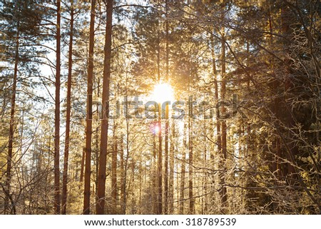 beautiful winter landscape with the forest and sunset - stock photo