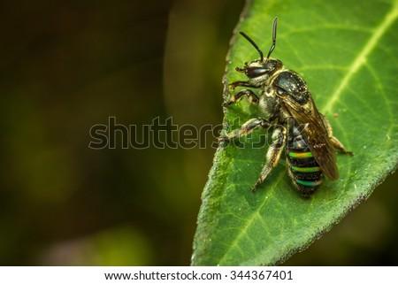 Bee  Close Up Macro  - stock photo