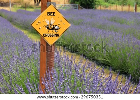 """""""Bee Crossing"""" sign in a field of lavender plants - stock photo"""