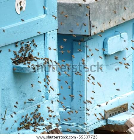 beehive and bee - stock photo