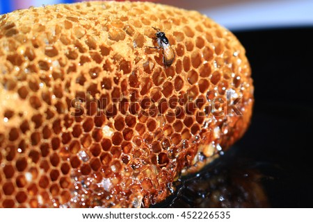Bees are making honey in the hive.