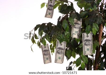 $100 bills growing on a money tree with a white background. - stock photo